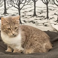 Adopt A Pet :: Sweetie - South Haven, MI