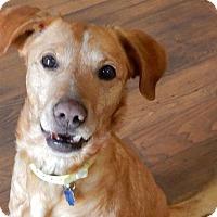 Adopt A Pet :: Doug - Denver, CO