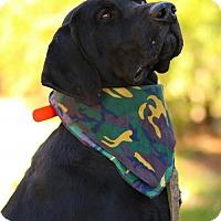 Adopt A Pet :: Ace - Princeton, MN
