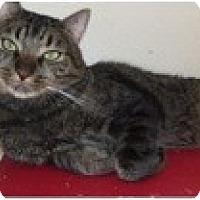 Adopt A Pet :: Pepper - El Cajon, CA