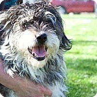 Adopt A Pet :: Hamilton - Novelty, OH