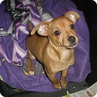 Adopt A Pet :: LORENZO - Mahopac, NY
