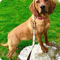 Adopt A Pet :: Vidalia - Wappingers, NY