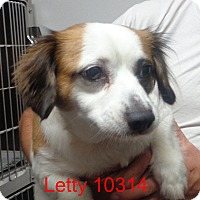 Adopt A Pet :: Letty - Greencastle, NC