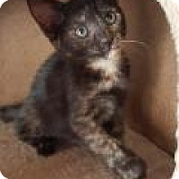 Adopt A Pet :: Sunshine - Mission Viejo, CA