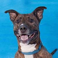 Adopt A Pet :: PUP STAR - Hampton Bays, NY