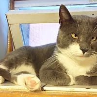 Adopt A Pet :: Bruser - Queens, NY