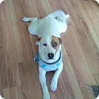 Adopt A Pet :: Maggie - Plainfield, CT