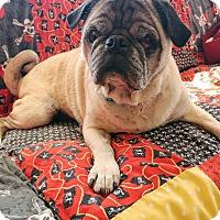 Adopt A Pet :: Albus - Beachwood, OH