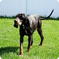 Adopt A Pet :: Raven - Belleville, MI