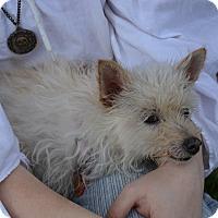 Adopt A Pet :: Renetta - Ogden, UT