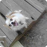 Adopt A Pet :: CRICKET - Bryan, TX