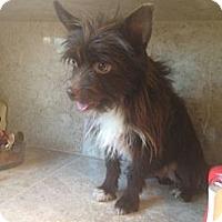 Adopt A Pet :: Reeses - Oceanside, CA