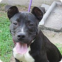 Adopt A Pet :: Homer - Chesterfield, VA