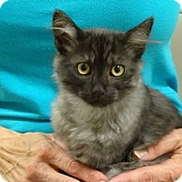 Adopt A Pet :: GWEN - Diamond Bar, CA