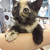 Adopt A Pet :: Suzanne Somers - Richboro, PA