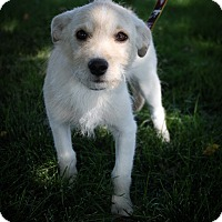 Adopt A Pet :: Link - Broomfield, CO