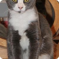 Adopt A Pet :: Pattycake - McDonough, GA