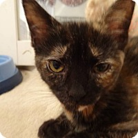 Adopt A Pet :: Amanda - Colmar, PA