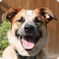 Adopt A Pet :: AVERIE - Nampa, ID