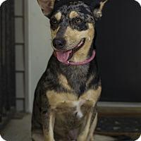 Adopt A Pet :: Lulu - Baton Rouge, LA