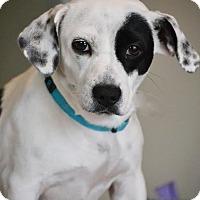 Adopt A Pet :: Pogo - Allentown, VA