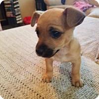 Adopt A Pet :: Rocco - Los Banos, CA
