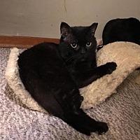 Adopt A Pet :: Blueberry - Trenton, NJ