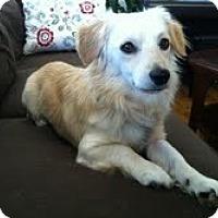 Adopt A Pet :: Russ - Santa Monica, CA