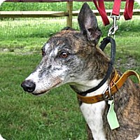 Adopt A Pet :: Whoopie (CTW Up And Comin) - Chagrin Falls, OH