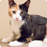 Adopt A Pet :: Emiko - Chicago, IL