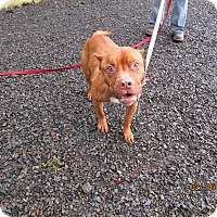 Adopt A Pet :: Bubbles - Tillamook, OR