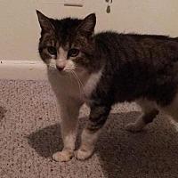 Adopt A Pet :: Toby the Senior Sweetheart - Oviedo, FL