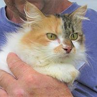 Adopt A Pet :: Kristen - Germantown, MD