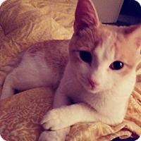 Adopt A Pet :: Milo - Jackson, NJ