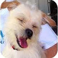 Adopt A Pet :: Mojo - Garland, TX