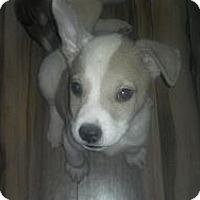 Adopt A Pet :: Crowley - Nashua, NH