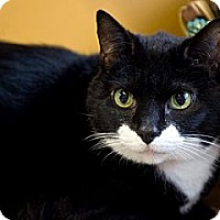 Adopt A Pet :: Stacie - Lancaster, MA