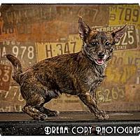 Adopt A Pet :: Chico - Owensboro, KY