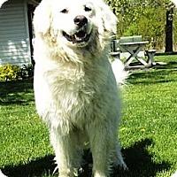 Adopt A Pet :: Duncan - Minneapolis, MN