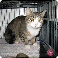 Adopt A Pet :: Layla - Shelton, WA