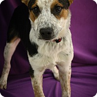 Adopt A Pet :: Evans - Broomfield, CO