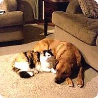 Adopt A Pet :: Referral - Leo - Denver, CO