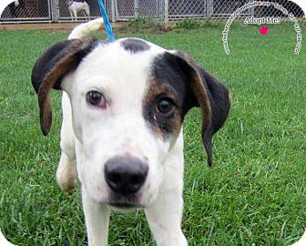Labrador Retriever Mix Dog for adoption in Sidney, Ohio - BJ