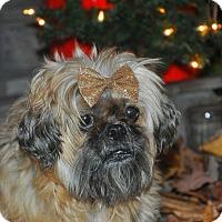 Adopt A Pet :: Ursula - Anderson, SC