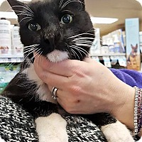 Adopt A Pet :: Toki - Nottingham, MD