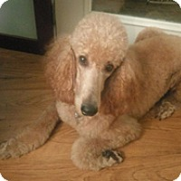 Adopt A Pet :: GINGER SPICE - Melbourne, FL