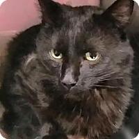 Adopt A Pet :: Wilhlelm - West Des Moines, IA