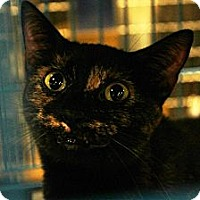 Adopt A Pet :: BIA - West Lafayette, IN