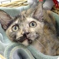 Adopt A Pet :: Eliana - Miami, FL